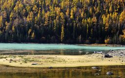 The Colour of Autumn,Wolong Bay Royalty Free Stock Photo