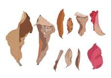 Colour brązu liścia sucha farba ilustracja wektor