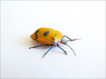 Colour Bug 2. Colourful garden insect (live) on white card Stock Photos