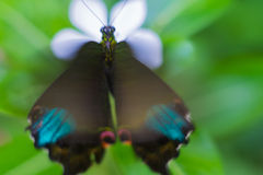 The colour of butterfly. Butterfly wing bug blur, light abstract focus brigh bokeh soft texture flower art plant Royalty Free Stock Photo
