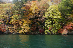 Colour changing along river. Colour changing maple tree along nikko river Royalty Free Stock Photos