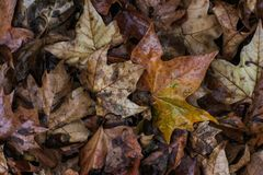 Colour dead leafs in autumn ground stock photos
