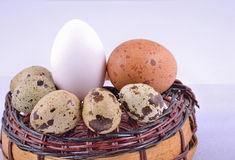 Colour egg on basket Stock Photo