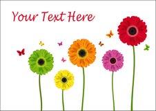 Colour flowers of gerbera Stock Image