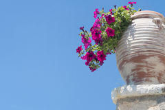 Colour Flowers Growing In Vase Against Blue Sky In Corfu Greece Royalty Free Stock Photos