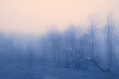 The colour fog stock images
