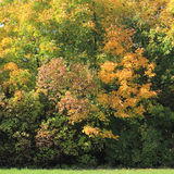 Colour-full trees and bushes in autumn Stock Images