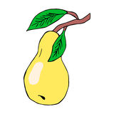 Colour image of pear. Vector image. Stock Image