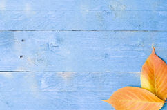 Colour leafs. On blue wooden background Stock Photo