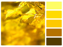 Colour palette swatch. Stock Photos
