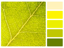 Colour palette swatch. Colour palette with complimentary swatches Royalty Free Stock Photos