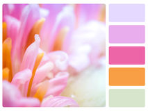 Colour palette swatch. Colour palette with complimentary swatches Royalty Free Stock Photography