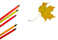 Colour pencils and maple leaf. Isolated on white vector illustration