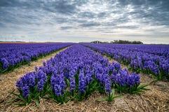 The colour purple Stock Photo