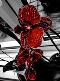 Colour splash orchid stock images