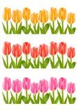 Colour tulip flowers set Royalty Free Stock Photos