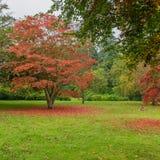 Colour Variations. An array of autumn colour at Exbury gardens stock photography