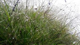 Colourbox passa in rassegna l'erba della primavera della natura nel primo mattino Immagine Stock