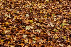 Coloured autumn leaves royalty free stock photos