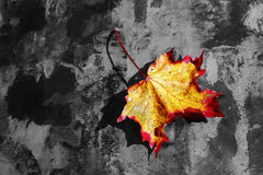 A coloured autumn sheet Royalty Free Stock Photography