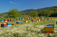 Coloured beehives. In the middle of a meadow royalty free stock image