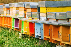 Coloured beehives. A long line of coloured beehives in the middle of a meadow royalty free stock photos