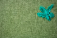 Coloured bird feathers on a fabric background Royalty Free Stock Photography
