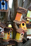 Coloured bird houses. Coloured houses on the tree, it is for the bird, like bird willage Royalty Free Stock Photography