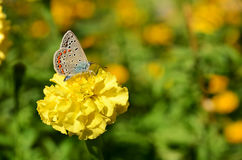 Coloured butterfly drink flower nectar. Summer, Day, Butterfly Stock Image