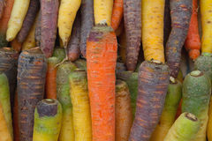 Coloured carrots Royalty Free Stock Images