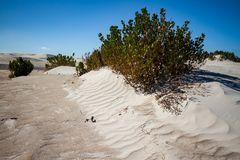 Coloured dune field with salt tolerant vegetation. Salt tolerant vegetation on the crest of a small, rippled white sand dune Stock Photography