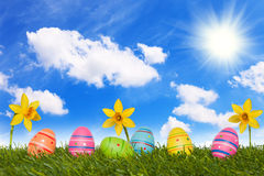 Coloured Easter eggs on meadow with daffodils - 08 Royalty Free Stock Images