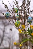 Coloured Easter eggs, willow catkins and narcissus flowers. In outdoors settings in Western Finland stock images