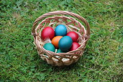 Coloured eggs in a basket Stock Images