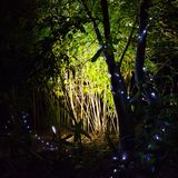 Illuminated Bamboo. Coloured fairy lights illuminate the forest to celebrate Diwali, the traditional Indian `Festival of Lights Royalty Free Stock Photos