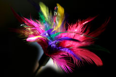 Coloured feathers. Photo of the cat's toy Stock Photography
