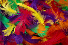 Coloured feathers backgound Royalty Free Stock Photos