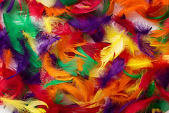 Coloured feathers backgound Stock Images