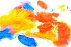 coloured feathers ideal for easter decoration Royalty Free Stock Photo