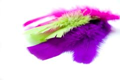 Coloured feathers on white Royalty Free Stock Photography