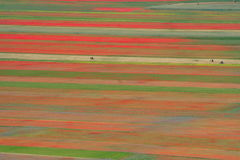 Coloured fields. Summer landscape captured in Castelluccio di Norcia - Umbria - Italy - June 2012 Royalty Free Stock Image