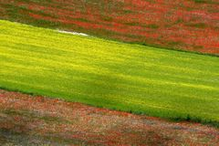 Coloured fields. Summer fields captured near Castelluccio di Norcia - Umbria - Italy Royalty Free Stock Photo