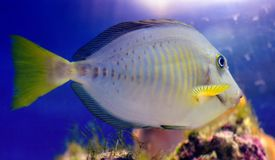 Coloured Fish Royalty Free Stock Image