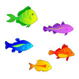 Coloured fishes Royalty Free Stock Images