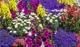 coloured flower bed Royalty Free Stock Photos