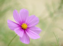 Coloured flower hope Royalty Free Stock Images