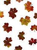 Coloured geranium leaf Stock Photos