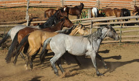 Coloured horses Stock Images