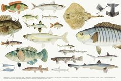 Coloured illustration of fish drawing collection Stock Photo