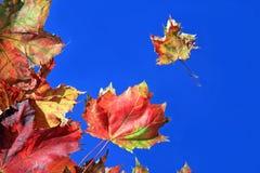 Coloured jesieni prześcieradła Zdjęcie Royalty Free
